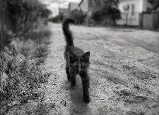 Хозяин улицы