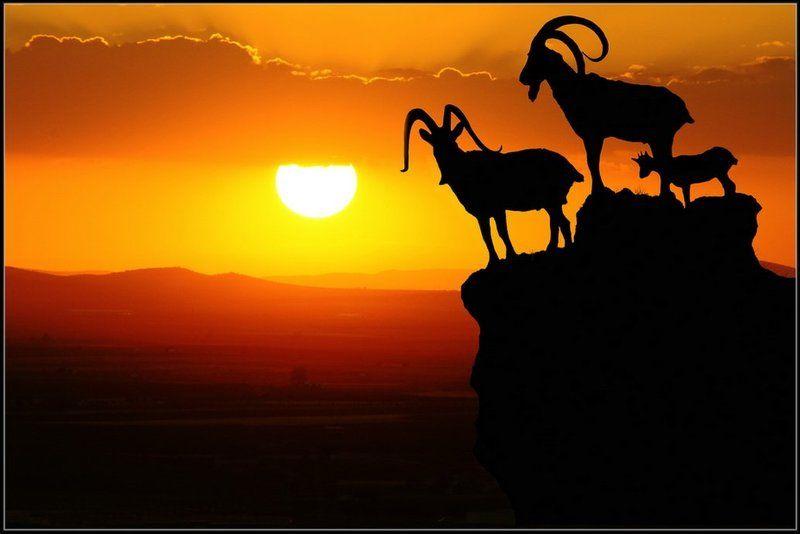 закат, горы, козлы Пейзажи  Андалусииphoto preview