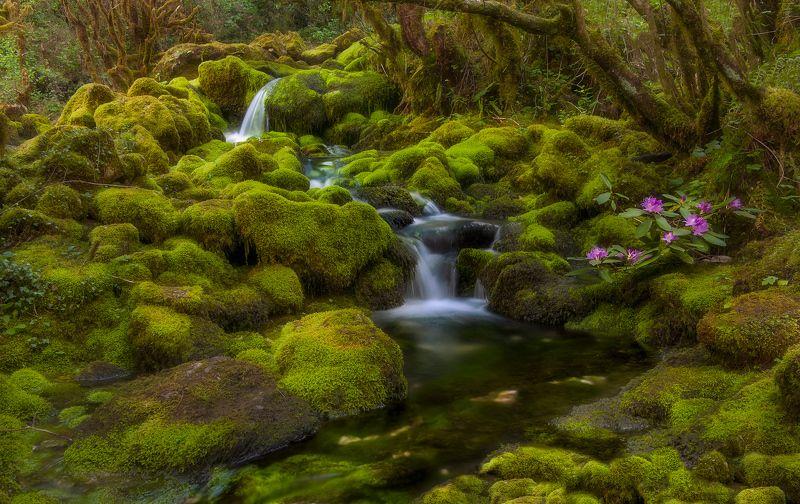 #nature #landscaspe #nikon #national parck #spring #instagram Green piecephoto preview