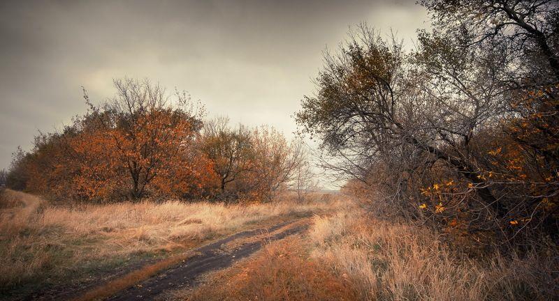 осень, лес, деревья, дорога, донецк, небо, облака, листья Донецкая осеньphoto preview