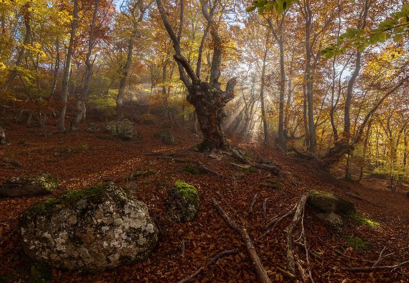 крым,буковый лес,туман Сказка букового леса.photo preview