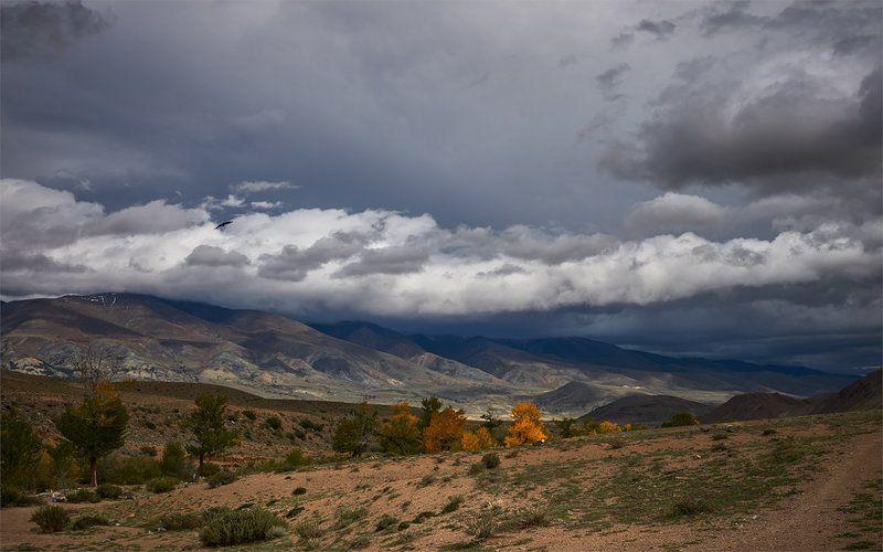 алтай, чуйская котловина, кызылчин, тучи, дождевые облака Пасмурный Кызылчинphoto preview