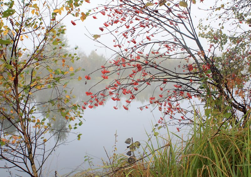 осень, туман , рябина *****photo preview