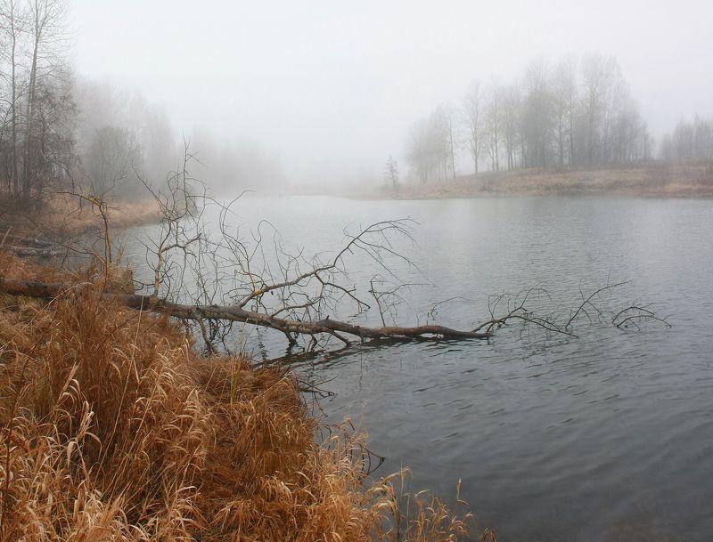 осень, туман, озеро Русский пейзаж )photo preview