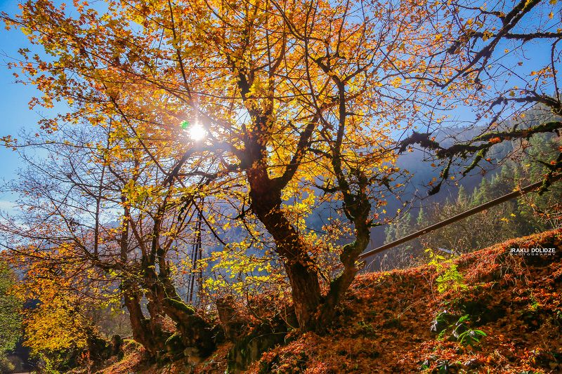 landscape, autumn, sun, photography, beautiful, hiking, trip, Autumnphoto preview