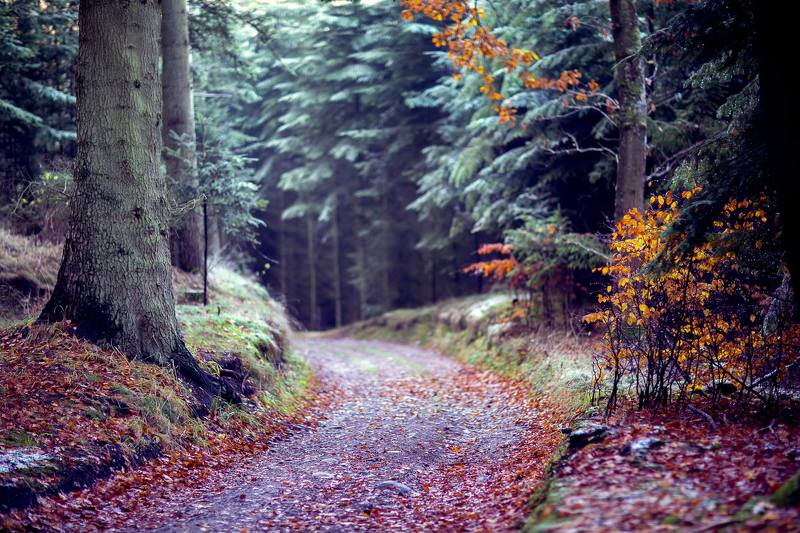 morning, forest, nature, landscape forestphoto preview