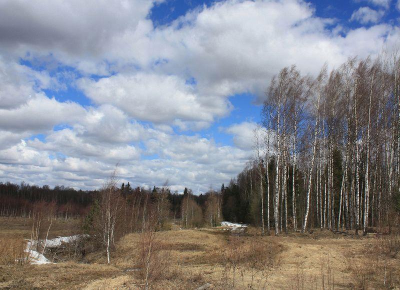 весна Русский пейзаж )photo preview