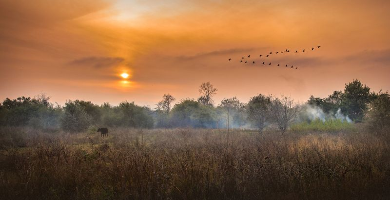 autumn,birds,flock,cow,grass,fire,smoke,trees,sky,evening,sun,sunset,haze,fog  the breath of autumn..photo preview