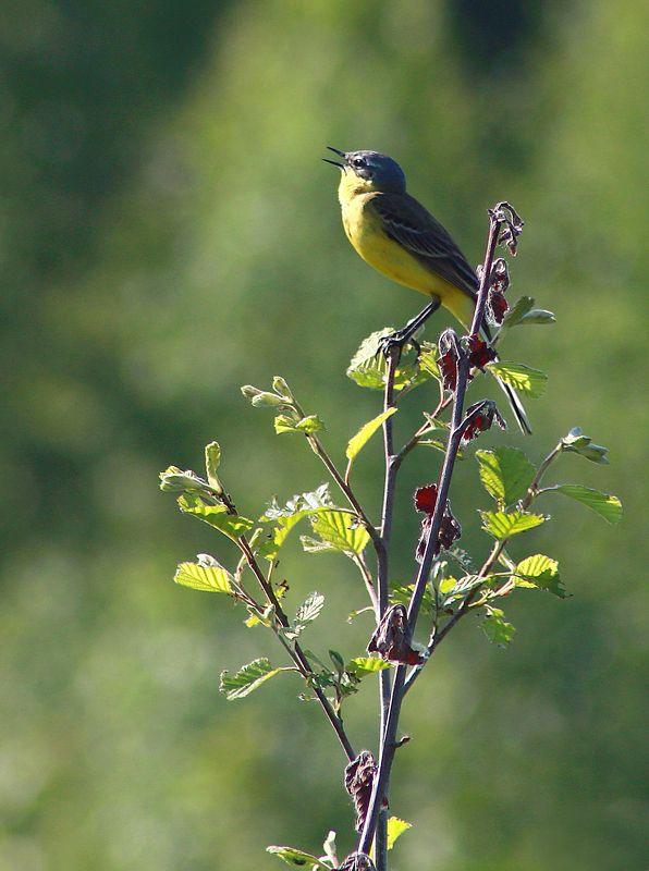 весна , птицы *****photo preview
