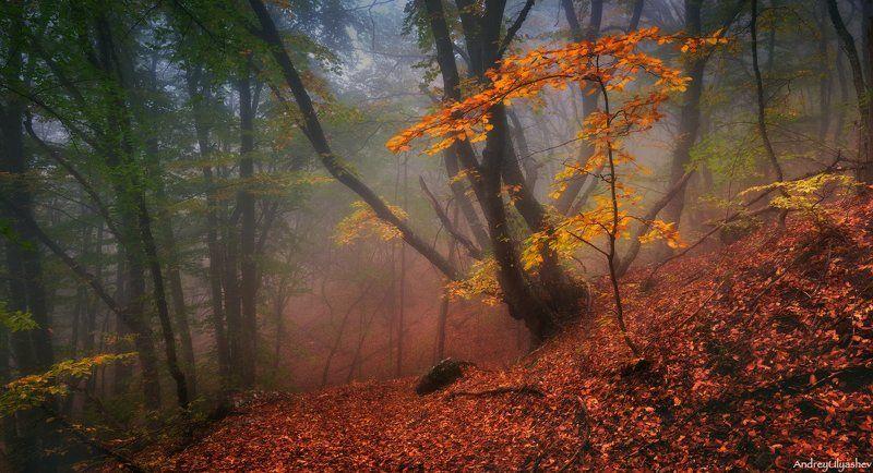 крым, демерджи, осень, лес, туман * * *photo preview