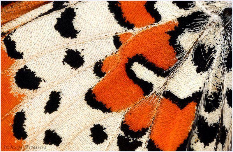 мегера, lasiommata megera, медведица, arctia caja О бабочках подробноphoto preview