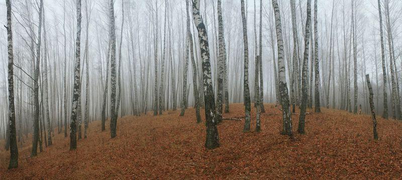 осень, туман Русский лес )photo preview