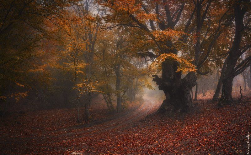 крым, демерджи, осень, лес, туман Свидетельphoto preview