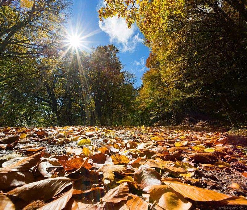 крым, ялта, осень, осень в крыму, осень в ялте, листья, солнце, небо, облака Осень в Ялтеphoto preview