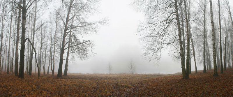 осень , туман Ноябрь )photo preview