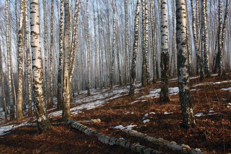 весна Русский лес )photo preview