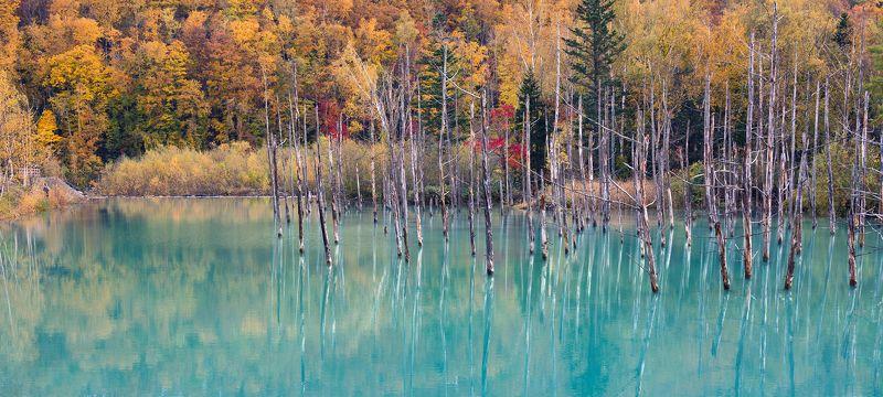 япония Осень на Голубом прудуphoto preview