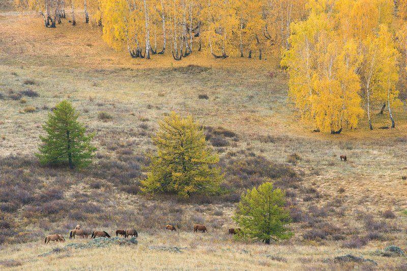 башкирия, лошади, осень, березы, лиственницы, урал photo preview