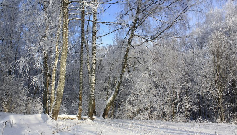 зима Русский лес )photo preview