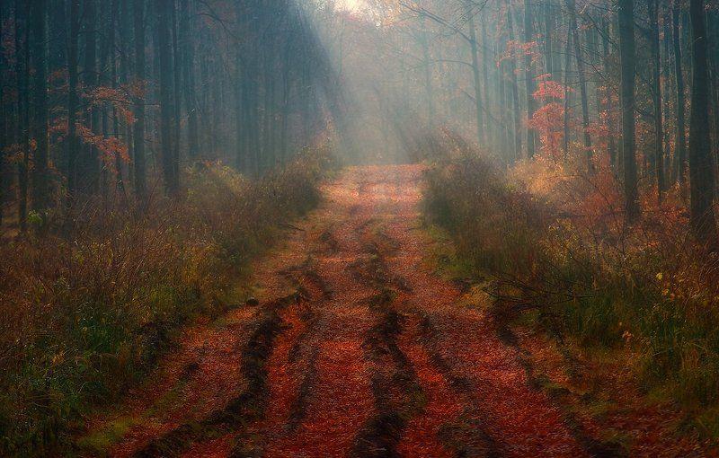 осень, утро, лес, туман, свет, лучи, дорога ||||\\|||photo preview