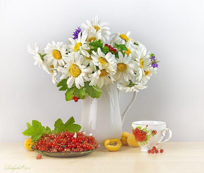 ромашки,цветы,красная смородина,абрикосы,чай Букет ромашекphoto preview