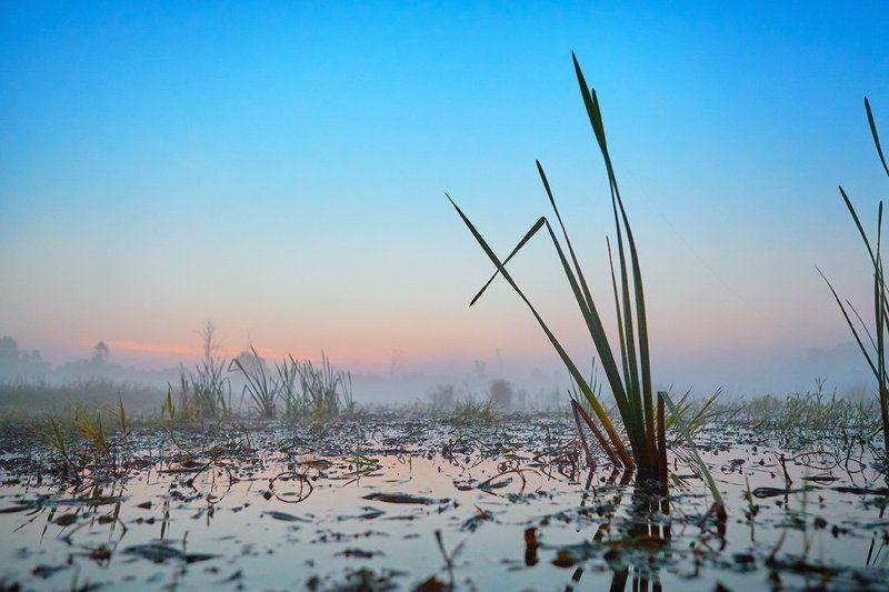 Сибирское утро туманноеphoto preview
