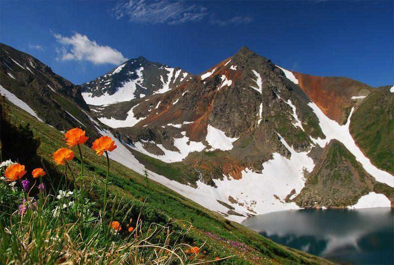 алтай, восточный казахстан, ивановский хребет, алтайская купальница Алтайские жаркиphoto preview