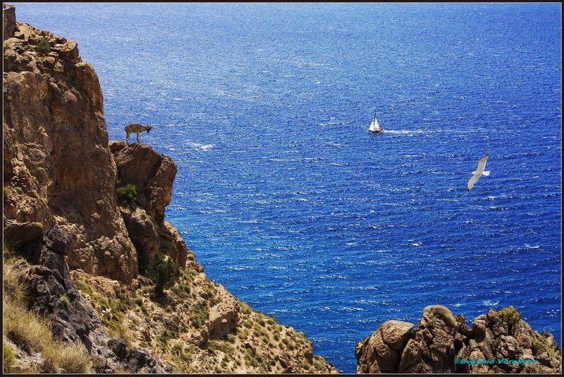 море, скалы, яхта, козлики Пейзажи Андалусииphoto preview