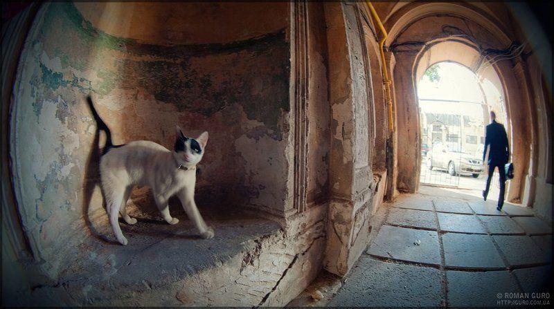 одесса, двор, кошка, свет в конце туннеля Одесса. дворик.photo preview
