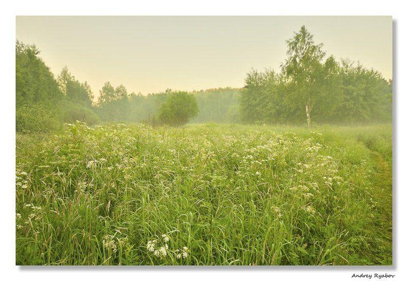 лето, , лес Летнее утро...photo preview
