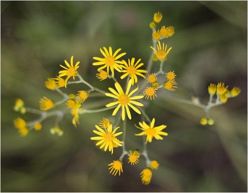 Просто желтые цветы.photo preview