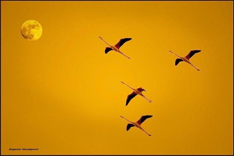они, летят, и, нас, , зовут, с, , собою Они летят и нас  зовут с собоюphoto preview