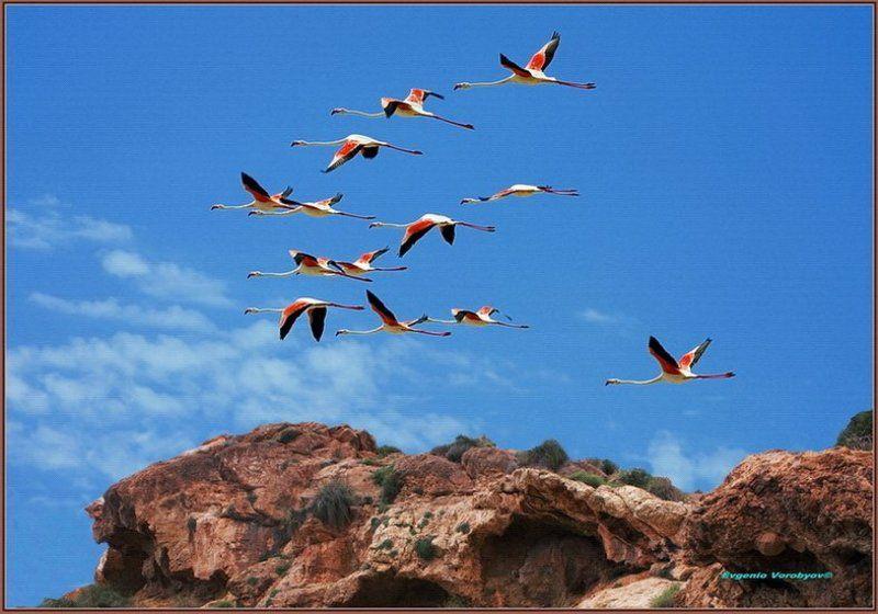 фламинго, скалы Летят перелетные птицыphoto preview