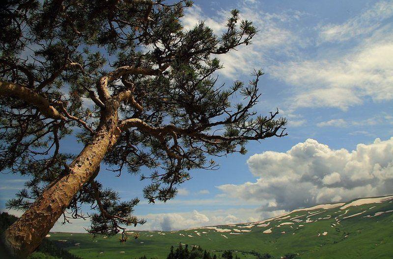 природа,пейзаж,горы,адыгея Адыгея.photo preview