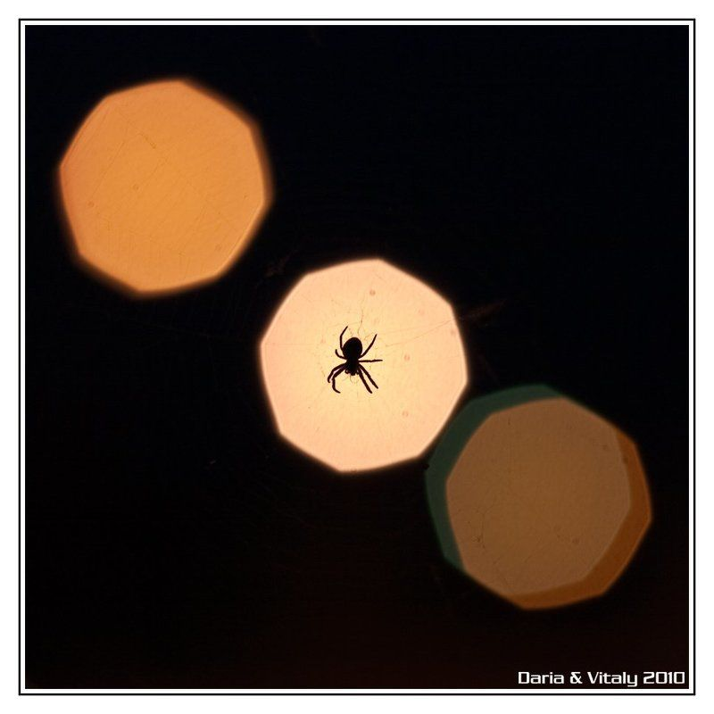 паук, насекомое, ночь Ночной охотникphoto preview