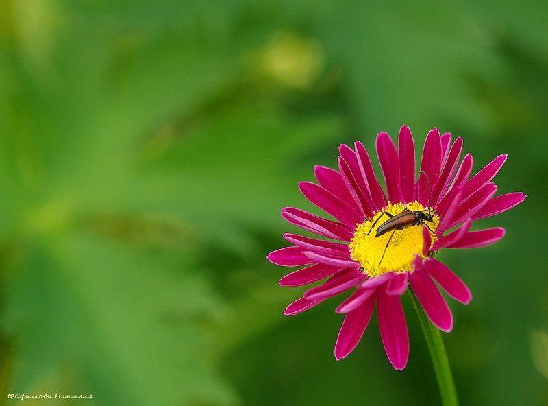 Жук на цветочкеphoto preview