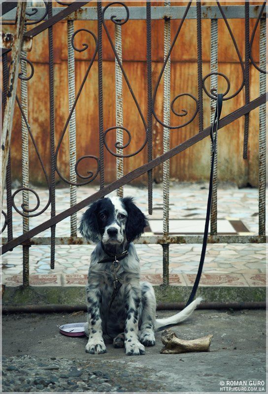 собака, кость, большая, сидит, грустная, страдает На сухом пайкеphoto preview