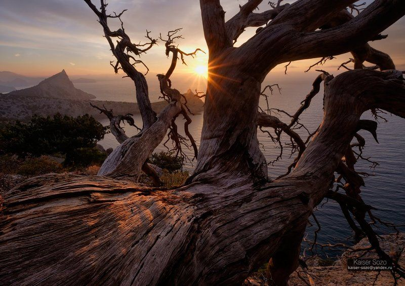 крым, капчик, мыс, можжевельник, сосна, дерево, ствол, рассвет Мёртвое дерево над обрывомphoto preview