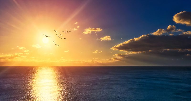yellow, landscape, sea, sunset, color, blue ,sun ,light ,beautiful ,seagulls In the rays of the setting sun..photo preview