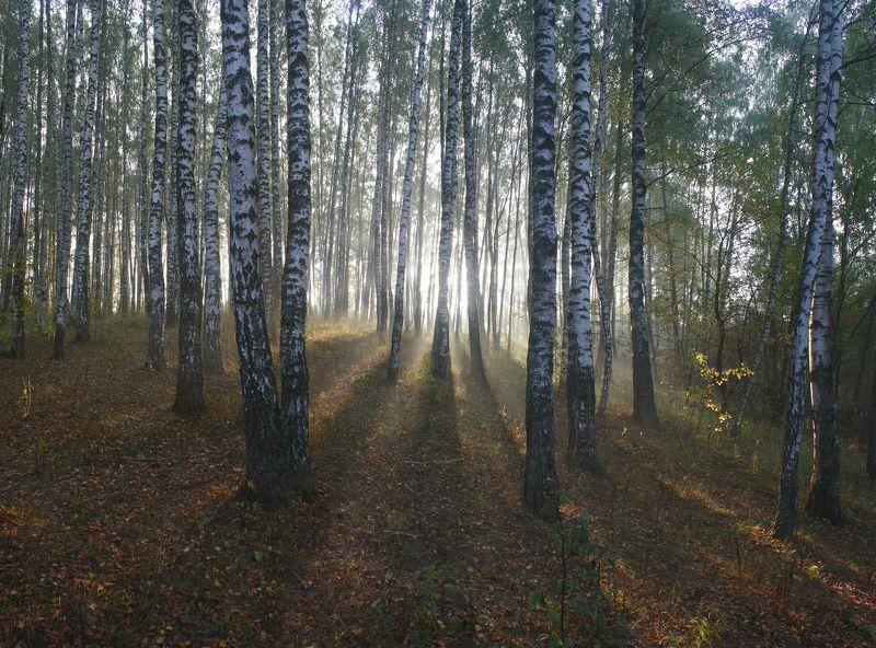 осень , лес , туман Русский лес )photo preview