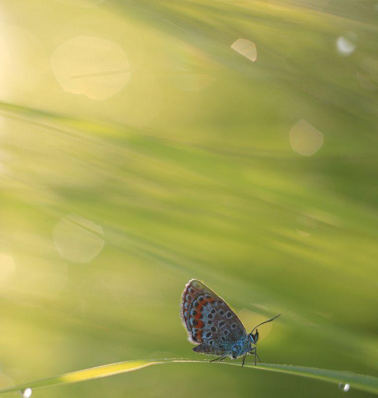 бабочка, лето, утро *****photo preview