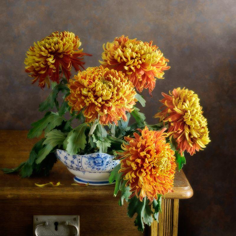 Цветочный, натюрморт, букет, желтый, красный, хризантема, белый, голубой, чашка, дневной, освещение, домашний, интерьер Красно-желтые хризантемыphoto preview