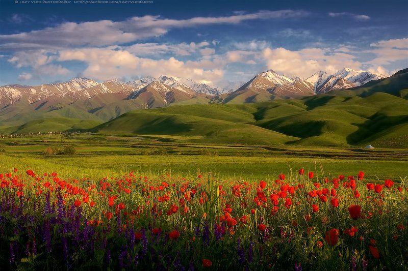 kyrgyzstan, kyrgyz, kg, bishkek, бишкек, киргизия, кыргызстан, маки, горы, lazy_vlad Цвета затянувшейся весныphoto preview