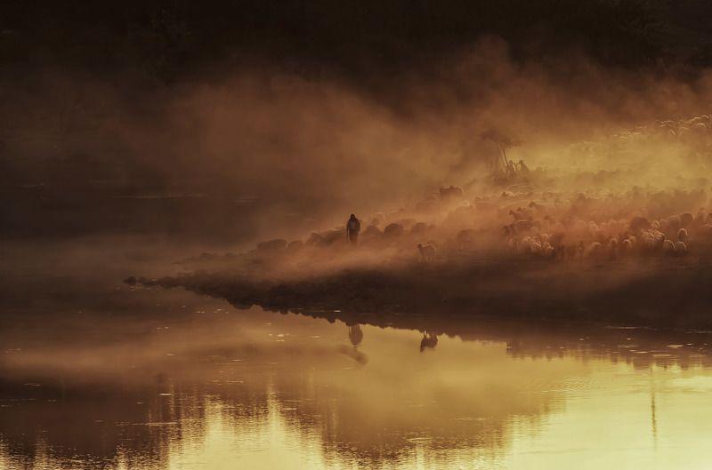 dicle batman,sürü,landscape,animal Diclephoto preview
