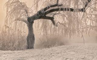 Тёплая графика морозного утра