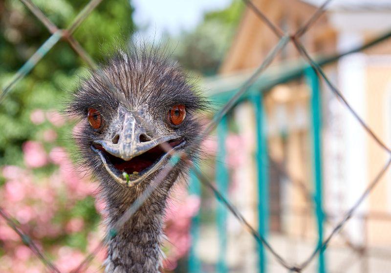 страус Вот и я!photo preview
