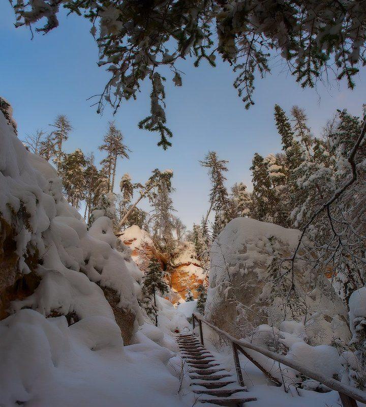 зима, снег, деревья, сосны photo preview
