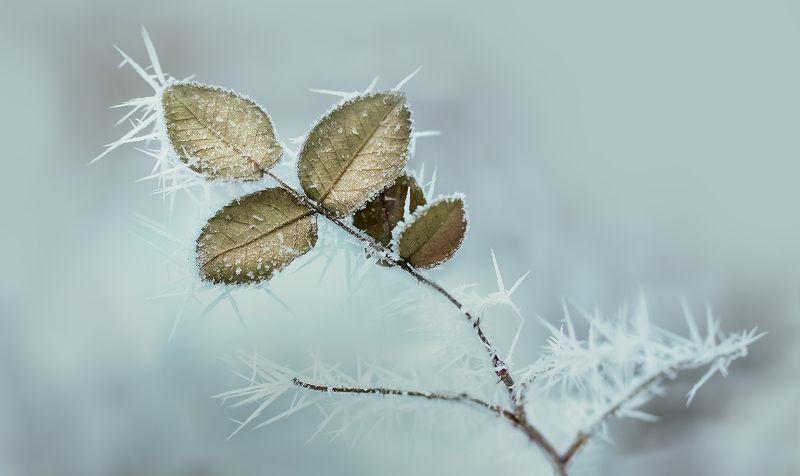 Иглы морозаphoto preview