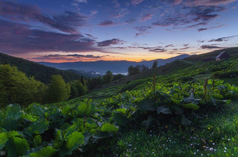 горы, закат, Карпаты, полонина, Менчул, лопухи, колыба, печка, пастухи В гостях у пастуховphoto preview