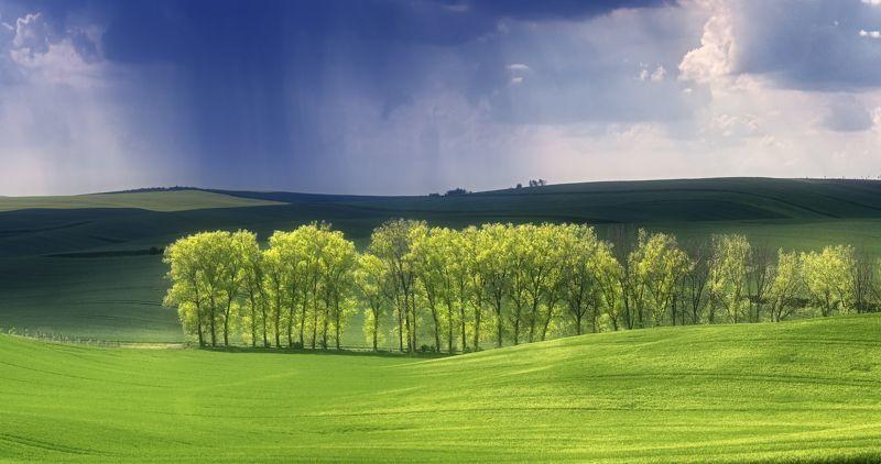 моравия, чехия, весна, май, поле, дождь Майский дождьphoto preview